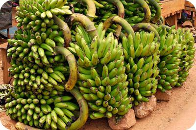 plantain-matooke-recipes-in-uganda-21774915